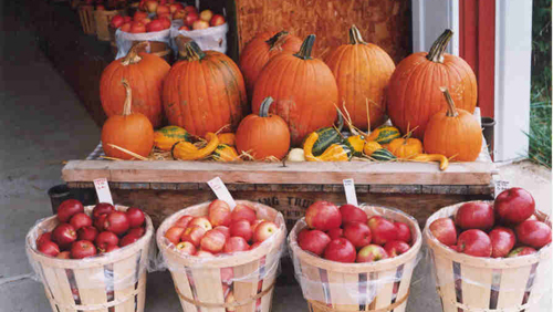 Pick Your Apples and Pumpkins in Illinois