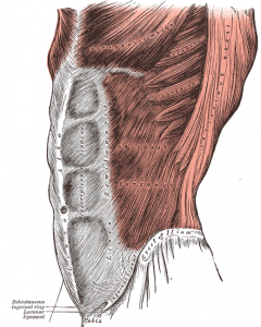 Grays_Anatomy_image392